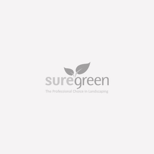 Faux-Lead Lion Head Cube Planter - Cube Planter - Lead Lite - Fibreclay Clayfibre - Frost-Resistant - Plant Pot - Square Planter