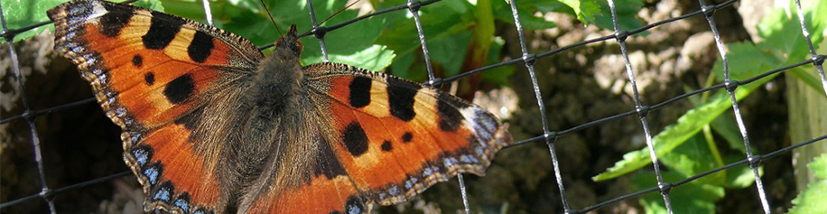 Bird and Butterfly Netting