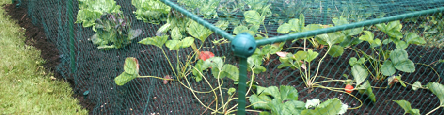 Fruit and Vegetable Cages